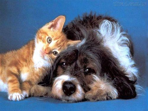Extremamente OS ANIMAIS E A ESPIRITUALIDADE | Blog do Dirceu Rabelo MV52