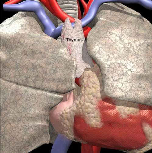 Exercício de aumento em um peito