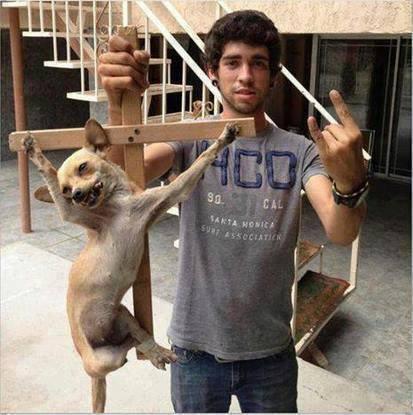 Cão cruxificado...