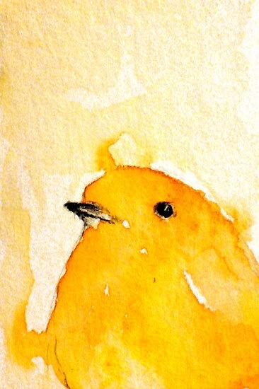 af34b8af1 Para meu irmão Márcio Thomaz Rabelo (in memoriam) que amava esses pássaros  canoros.